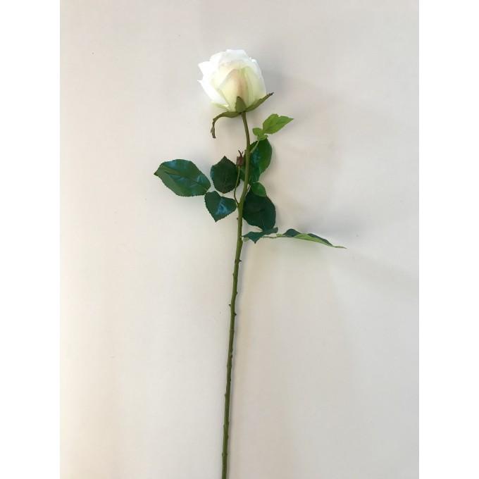 Květ bílá růže