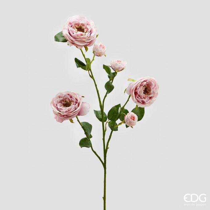 Květ růže Rex -50%