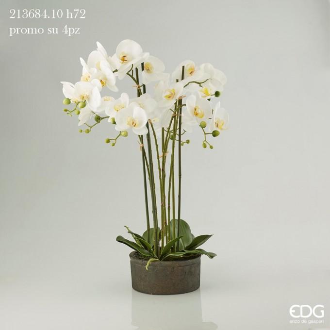 Květina - orchidej v květináči